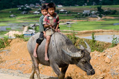 Παιδιά στη MU Cang Chai, Βιετνάμ Στοκ Εικόνα