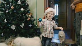Παιδικά παιχνίδια με τα κουτάβια Samoyed απόθεμα βίντεο