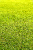παιδική χαρά, πράσινο σχέδιο χορτοταπήτων, πράσινο φυσικό υπόβαθρο χλόης Στοκ Εικόνες