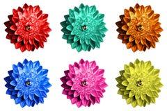 Πακέτο της χρωματισμένης υπερρεαλιστικής μακροεντολής λουλουδιών φαντασίας που απομονώνεται Στοκ Εικόνες