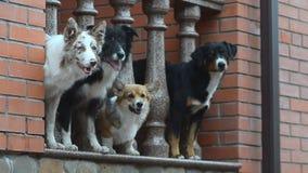 Πακέτο των σκυλιών σε ένα μέρος απόθεμα βίντεο