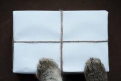 πακέτο Στοκ εικόνα με δικαίωμα ελεύθερης χρήσης