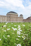 παλάτι βασιλικό Στοκ εικόνες με δικαίωμα ελεύθερης χρήσης