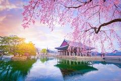 Παλάτι Gyeongbokgung με το χρόνο δέντρων ανθών κερασιών την άνοιξη μέσα στοκ εικόνα