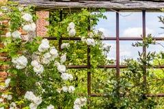 Παλαιά βρετανική φυτεία με τριανταφυλλιές στοκ εικόνες