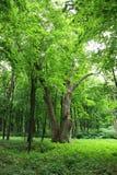 παλαιά δέντρα πάρκων Στοκ φωτογραφία με δικαίωμα ελεύθερης χρήσης