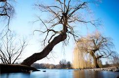 Παλαιά δέντρα πέρα από τη λίμνη στοκ εικόνα