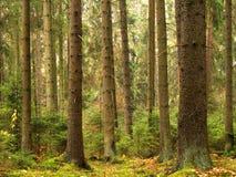 Παλαιά δέντρα στοκ εικόνες