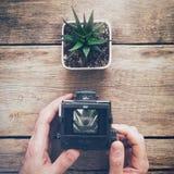Παλαιά κάμερα εκμετάλλευσης φωτογράφων και λήψη μιας φωτογραφίας succulent στοκ φωτογραφίες με δικαίωμα ελεύθερης χρήσης