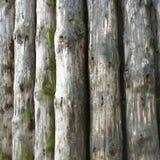 Παλαιά κούτσουρα υποβάθρου σύστασης/αφηρημένο γκρίζο υπόβαθρο φύσης  στοκ εικόνες με δικαίωμα ελεύθερης χρήσης