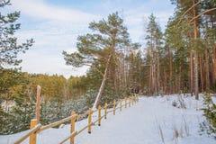 Παλαιά λατομείο και δέντρα άμμου Ogre πόλεων Φωτογραφία ταξιδιού 2018 Στοκ Εικόνες