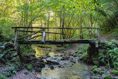 Παλαιά ξύλινη γέφυρα στο δάσος στις αστουρίες, Ισπανία στοκ εικόνα με δικαίωμα ελεύθερης χρήσης