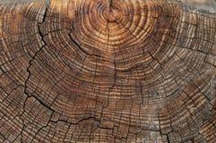 Παλαιά ξύλινη σύσταση Στοκ Φωτογραφίες