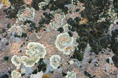 παλαιά πέτρα ανασκόπησης Στοκ Εικόνα