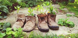 Παλαιά παπουτσιών εγκαταστάσεων διακοσμήσεων δημιουργική έννοια ουσίας επαναχρησιμοποίησης παλαιά στοκ εικόνα με δικαίωμα ελεύθερης χρήσης