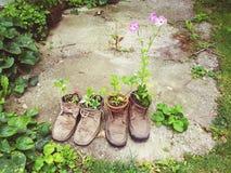 Παλαιά παπουτσιών εγκαταστάσεων διακοσμήσεων δημιουργική έννοια ουσίας επαναχρησιμοποίησης παλαιά στοκ φωτογραφία με δικαίωμα ελεύθερης χρήσης