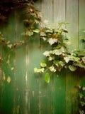 Παλαιά πράσινη πόρτα που εισβάλλεται από το άγριο υπόβαθρο κισσών Στοκ φωτογραφίες με δικαίωμα ελεύθερης χρήσης