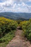 Παλαιά σκάλα πετρών στο marigold δέντρων μεξικάνικο τομέα ηλίανθων στοκ εικόνες