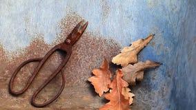 Παλαιά σκουριασμένα φύλλα βελανιδιών ψαλιδιού κανένα hd μήκος σε πόδηα απόθεμα βίντεο