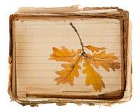 Παλαιά σύσταση εγγράφου λεπτομερώς και φθινοπωρινός κλάδος Στοκ Εικόνες