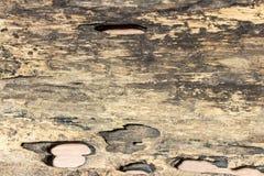 παλαιά σύσταση ξύλινη Στοκ φωτογραφία με δικαίωμα ελεύθερης χρήσης