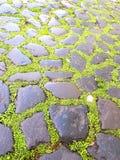 Παλαιά mossy τούβλα και πεζοδρόμιο πετρών στοκ φωτογραφίες με δικαίωμα ελεύθερης χρήσης