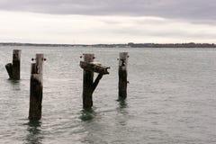 Παλαιές συσσωρεύσεις αποβαθρών στο Hull, μΑ Στοκ Εικόνες