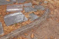 Παλαιοί δέντρο ρίζας και φραγμός πετρών Στοκ εικόνες με δικαίωμα ελεύθερης χρήσης