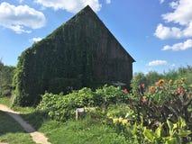 Παλαιοί ξύλινοι σιταποθήκη και μπλε ουρανός στοκ φωτογραφία