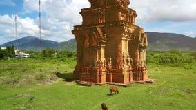 Παλαιοί πύργοι ναών και βόσκοντας αγελάδες κατά την άποψη κηφήνων κοιλάδων απόθεμα βίντεο