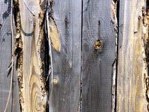 Παλαιός άβαφος ξύλινος φράκτης Ρωσικός τρύγος Όμορφοι παλαιοί πίνακες Ντεκόρ για shabby κομψό ύφους σχεδίου Πίνακες σιταποθηκών γ στοκ φωτογραφία με δικαίωμα ελεύθερης χρήσης