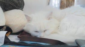 Παλαιός άσπρος τρόπος ζωής ύπνου γατών στον πίνακα δίπλα στις σφαίρες για το πλέξιμο παλαιά όμορφη άσπρη συνεδρίαση γατών από απόθεμα βίντεο