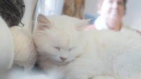 Παλαιός άσπρος ύπνος γατών κατοικίδιων ζώων στον πίνακα δίπλα στις σφαίρες για το πλέξιμο παλαιά όμορφη άσπρη συνεδρίαση γατών απ φιλμ μικρού μήκους