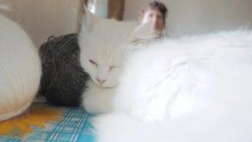 Παλαιός άσπρος ύπνος γατών στον πίνακα δίπλα στις σφαίρες για το πλέξιμο παλαιά όμορφη άσπρη συνεδρίαση γατών από το παράθυρο φιλμ μικρού μήκους