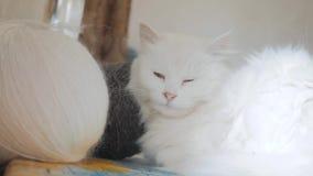 Παλαιός άσπρος ύπνος γατών στον πίνακα δίπλα στις σφαίρες για το πλέξιμο παλαιά όμορφη άσπρη συνεδρίαση γατών από το παράθυρο απόθεμα βίντεο