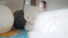 Παλαιός άσπρος ύπνος γατών στον πίνακα δίπλα στις σφαίρες για το πλέξιμο παλαιά όμορφη άσπρη συνεδρίαση γατών από τον τρόπο ζωής απόθεμα βίντεο