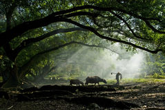 Παλαιός αγρότης κάτω από το αρχαίο banyan δέντρο