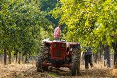 Παλαιός αγρότης με τα δαμάσκηνα συγκομιδής τρακτέρ Στοκ φωτογραφίες με δικαίωμα ελεύθερης χρήσης