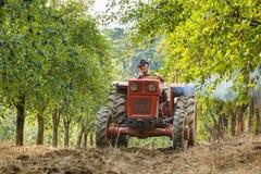 Παλαιός αγρότης με τα δαμάσκηνα συγκομιδής τρακτέρ Στοκ Εικόνες
