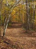 Παλαιός, αχρησιμοποίητος δασικός δρόμος κατά τη διάρκεια του φθινοπώρου Στοκ εικόνες με δικαίωμα ελεύθερης χρήσης