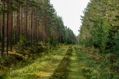 Παλαιός δρόμος σε ένα δάσος στοκ εικόνα με δικαίωμα ελεύθερης χρήσης