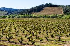 Παλαιός και νέος: Ανανέωση χώρας κρασιού στοκ φωτογραφίες με δικαίωμα ελεύθερης χρήσης