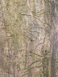 παλαιός κορμός δέντρων Στοκ Φωτογραφίες