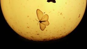 Παλαιός λαμπτήρας, σκώροι και μικρά έντομα τη νύχτα απόθεμα βίντεο