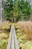 Παλαιός ξύλινος θαλάσσιος περίπατος που καλύπτεται με τα φύλλα στο αρχαίο δάσος Στοκ Φωτογραφίες
