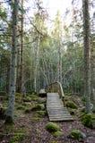 Παλαιός ξύλινος θαλάσσιος περίπατος που καλύπτεται με τα φύλλα στο αρχαίο δάσος Στοκ φωτογραφία με δικαίωμα ελεύθερης χρήσης