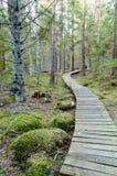 Παλαιός ξύλινος θαλάσσιος περίπατος που καλύπτεται με τα φύλλα στο αρχαίο δάσος Στοκ εικόνα με δικαίωμα ελεύθερης χρήσης