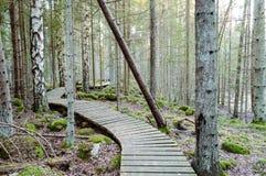 Παλαιός ξύλινος θαλάσσιος περίπατος που καλύπτεται με τα φύλλα στο αρχαίο δάσος Στοκ εικόνες με δικαίωμα ελεύθερης χρήσης