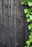 Παλαιός ξύλινος τοίχος με τα πράσινα φύλλα Στοκ Φωτογραφίες