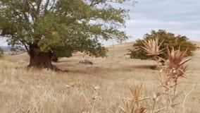 Παλαιός ο κορμός, οι ρίζες και οι κλάδοι δέντρων απόθεμα βίντεο